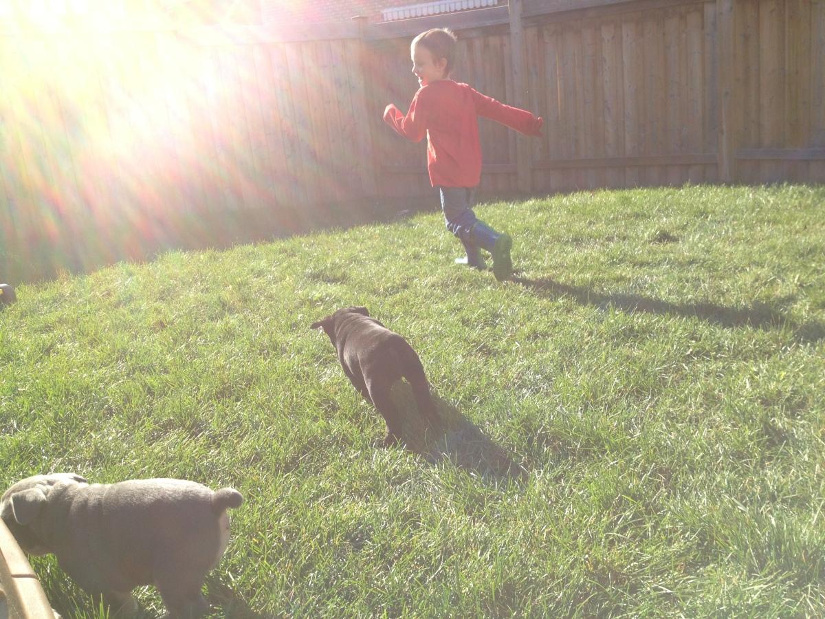 puppies of milton