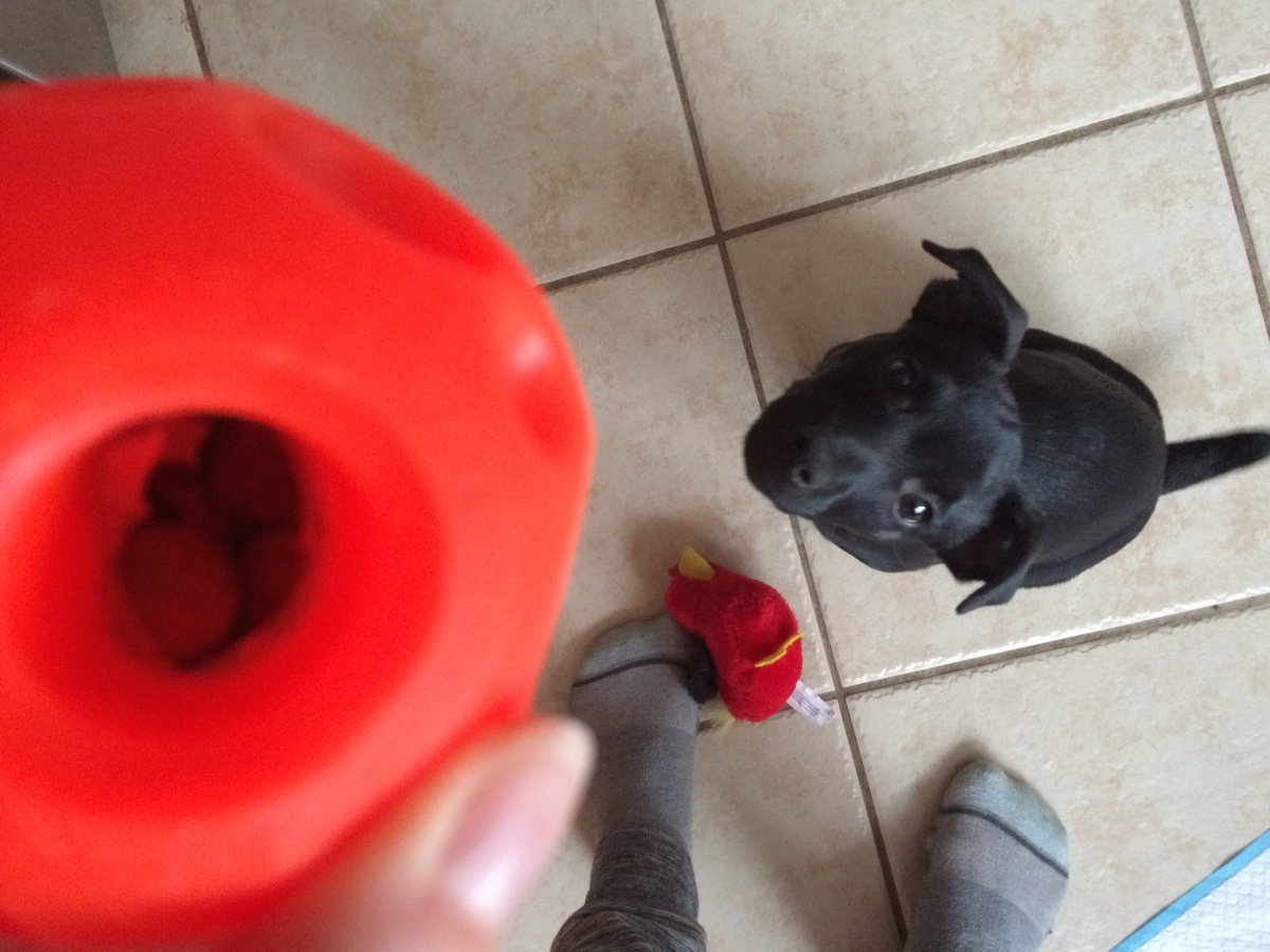 cute puppy training milton ontairo