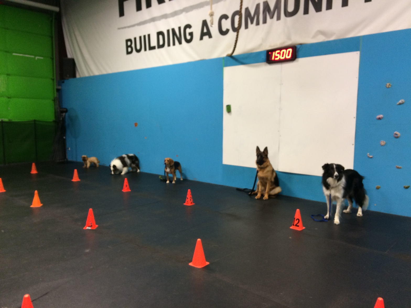 dog training classes milton ontario