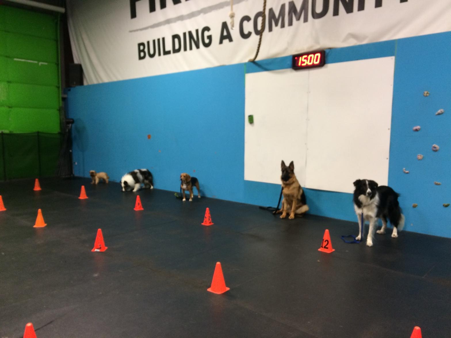 dog training classes milton ontario