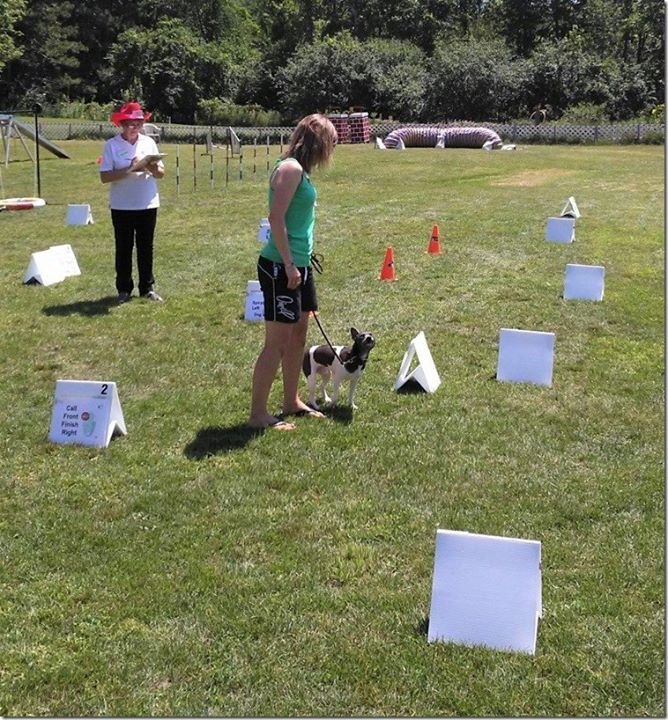 rally obedience classes milton